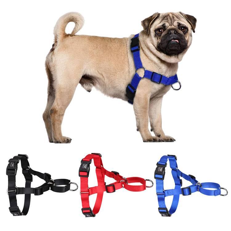 Как надеть шлейку собаке: инструкция и полезные советы