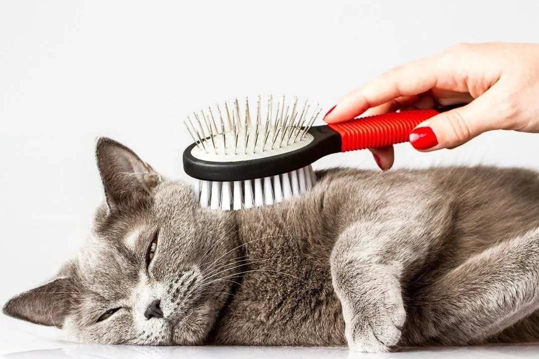 Стрижка котов: плюсы и минусы процедуры