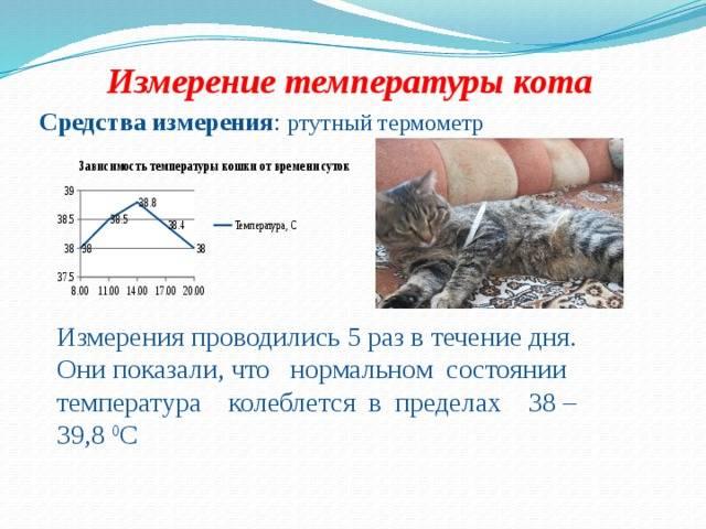 Как понять, что у кошки температура: как определить без градусника