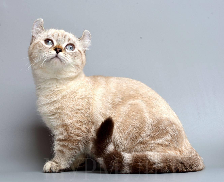 Породы кошек и их особенности
