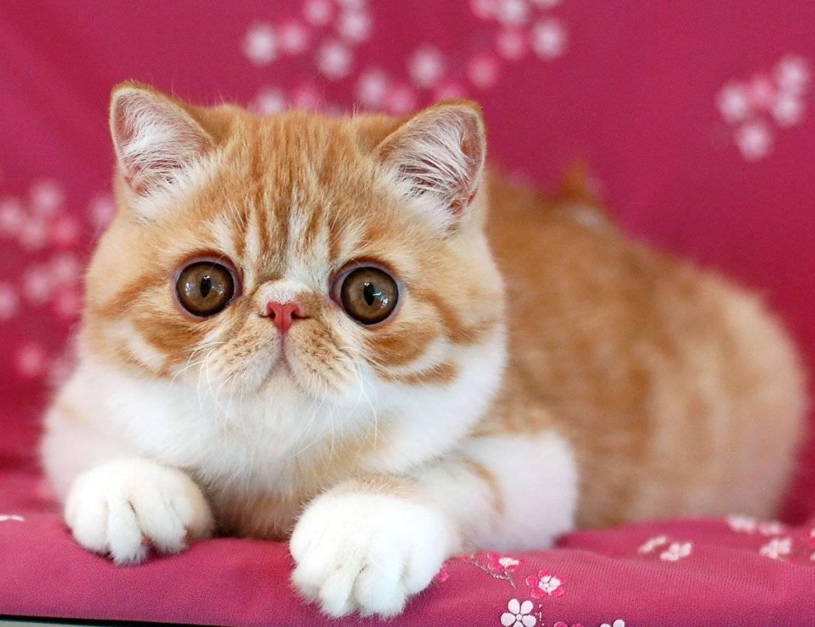 Всемирно узнаваемые коты: 20 самых популярных очаровашек с нестандартной внешностью