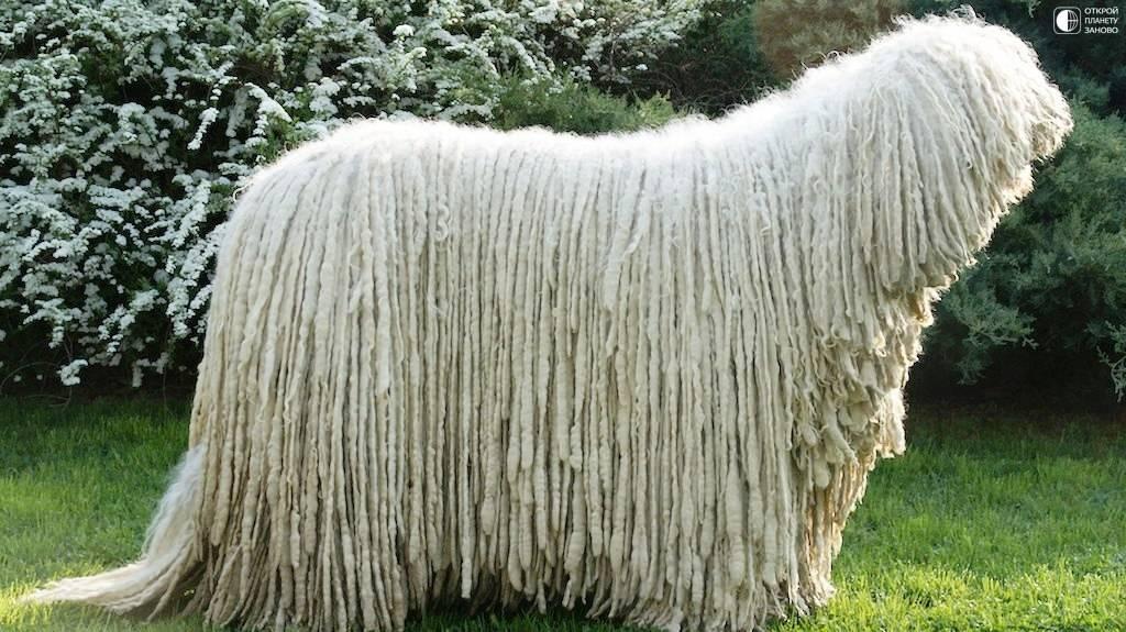 Типы шерсти у собак ◈ подшерсток и виды окраса