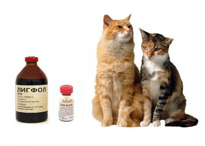 Препарат лигфол для кошек: панацея или рекламный ход. инструкция по применению и отзывы на лигфол для собак