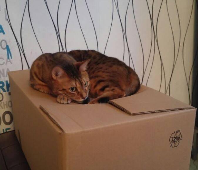 Подготовка, переезд, адаптация: как переехать с кошкой в новую квартиру