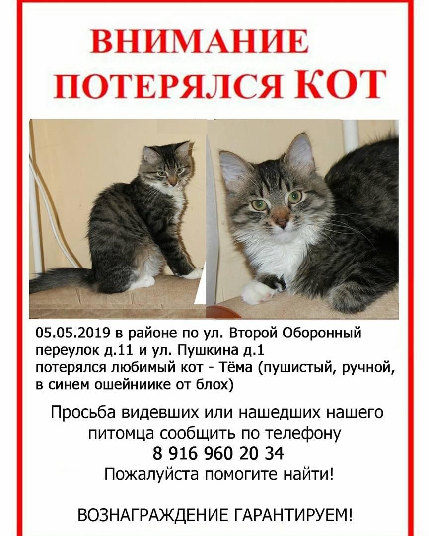 Кот пропал: что делать, как найти животное, советы и рекомендации владельцам потерявшихся кошек