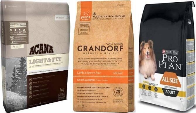 Какой сухой корм выбрать для собаки средних размеров | наши лучшие друзья