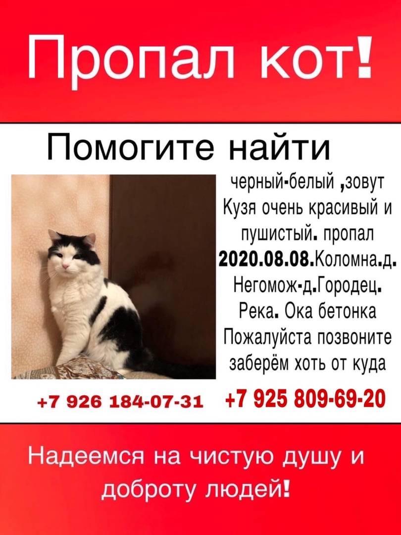 Пропала кошка: что делать? советы владельцам, как найти потеряшку