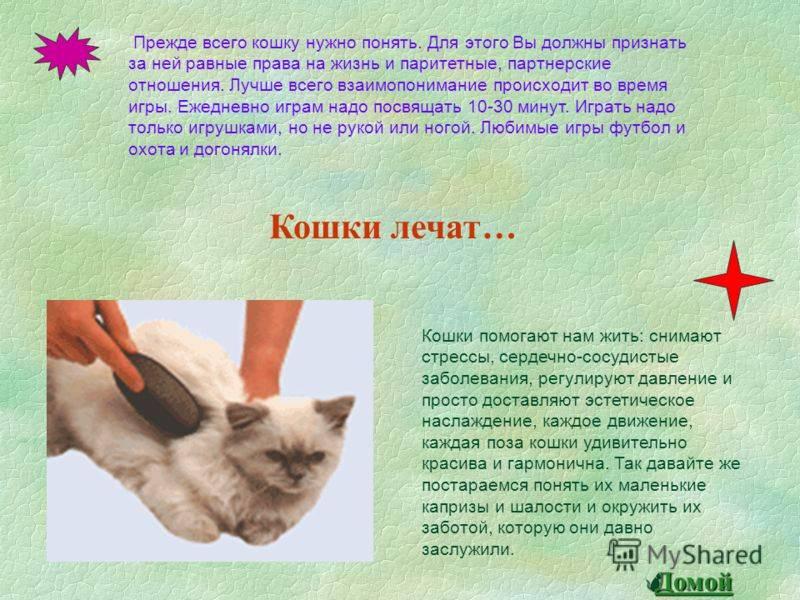 Пять интересных фактов о хвосте кошки.