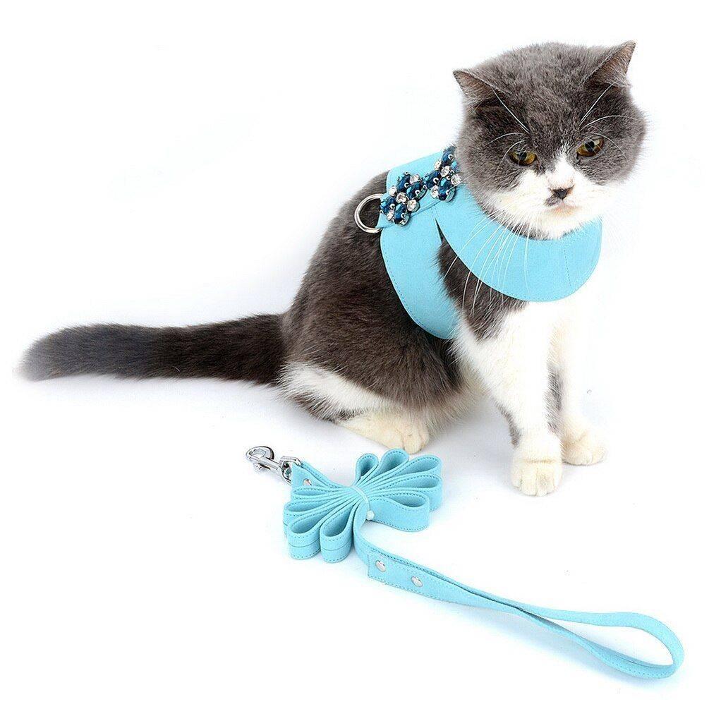 Шлейка для кошки и кота: как выбрать, правильно надеть и приучить | фото