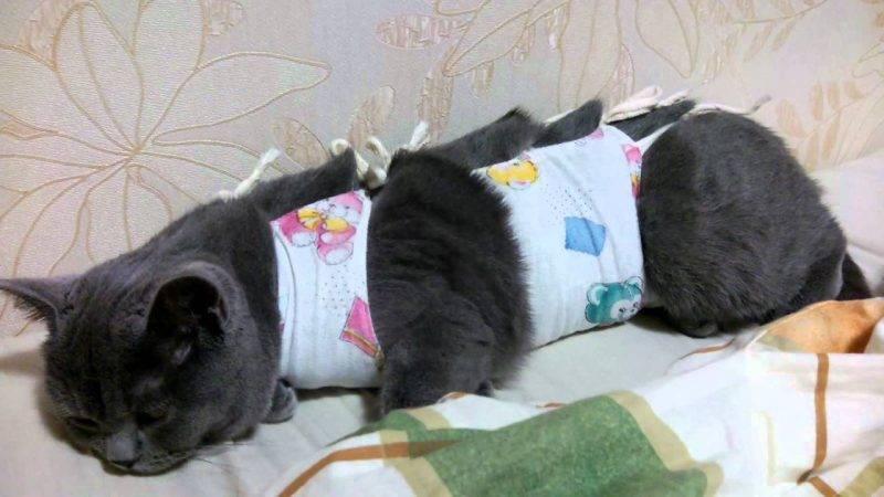Сколько живут стерилизованные кошки в домашних условиях