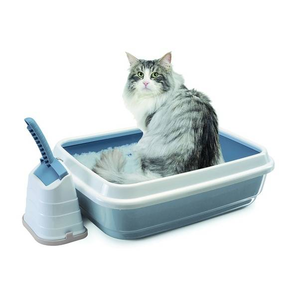Варианты выбора наполнителей в кошачий туалет: рейтинг лучших и основные виды