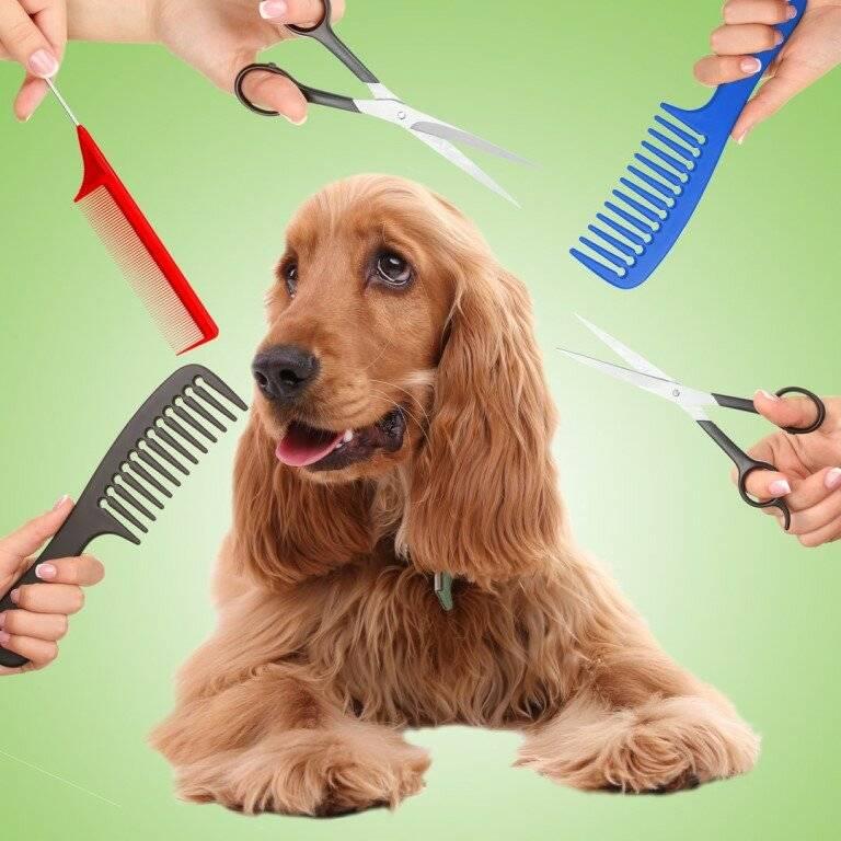 Как подстричь йорка в домашних условиях: пошаговая инструкция