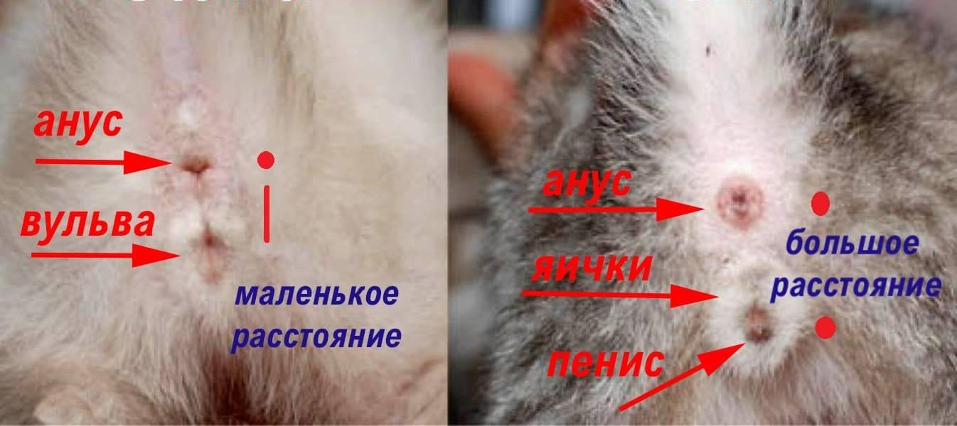 Как определить пол щенка: различные методы и основные особенности