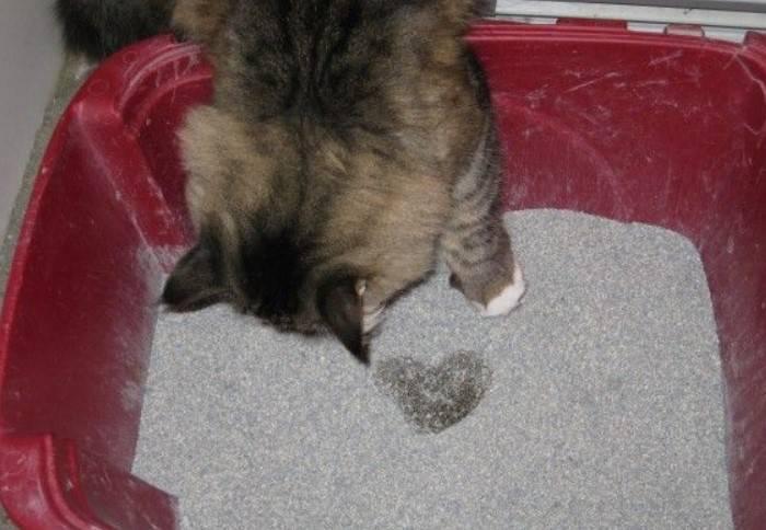 Кошка какает с кровью, когда ходит в туалет по большому