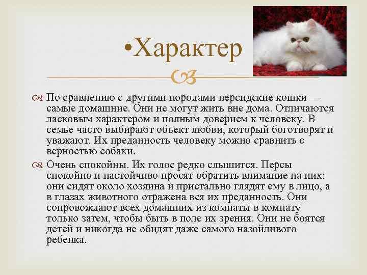 Можно ли кормить котенка кормом для кошек