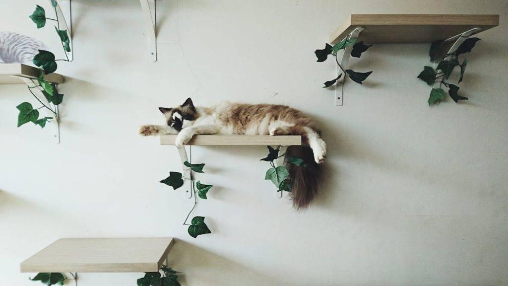 Как отучить кошку драть обои и мебель: советы и рекомендации экспертов
