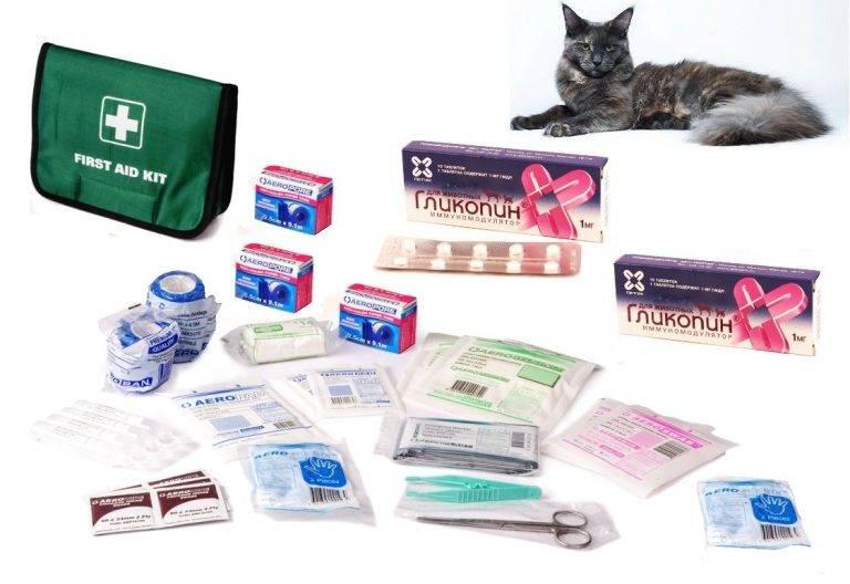 Панкреатит у кошек и собак, диагностика и лечение