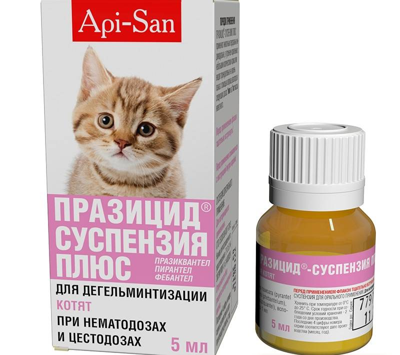 Таблетки и другие средства от глистов для кошек
