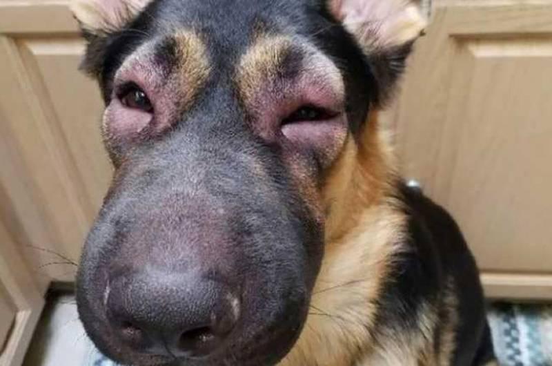 Почему собака чешет морду и уши – ищем причины почему собака чешет морду и уши – ищем причины