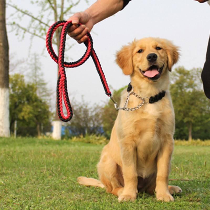 Ошейник-удавка для собак