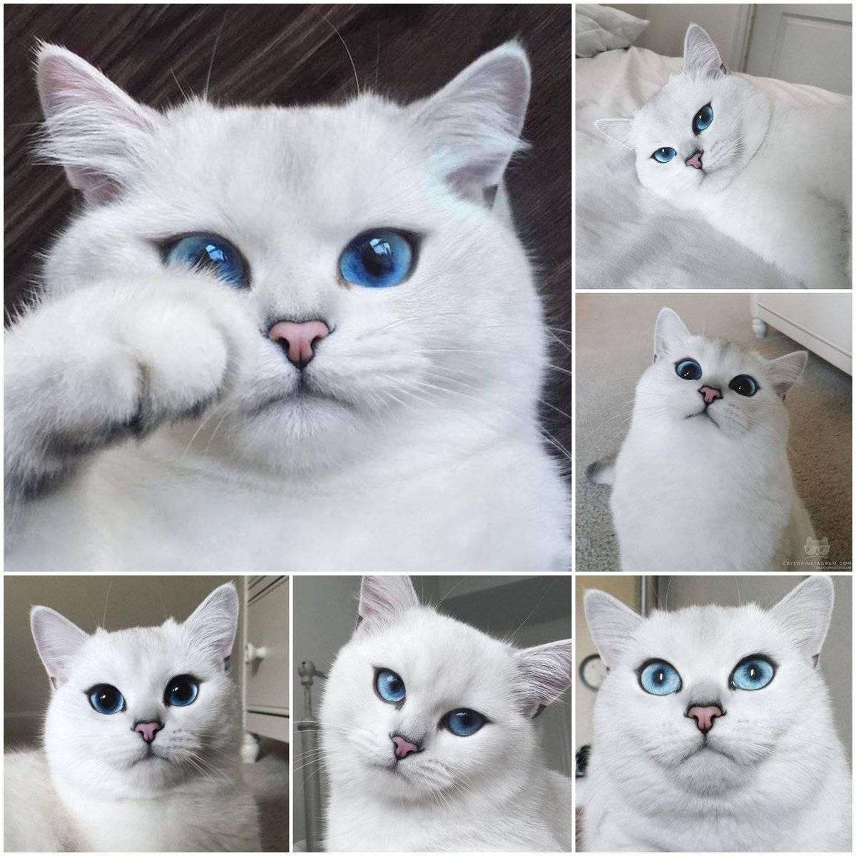 Милые котики: варианты самых красивых пород