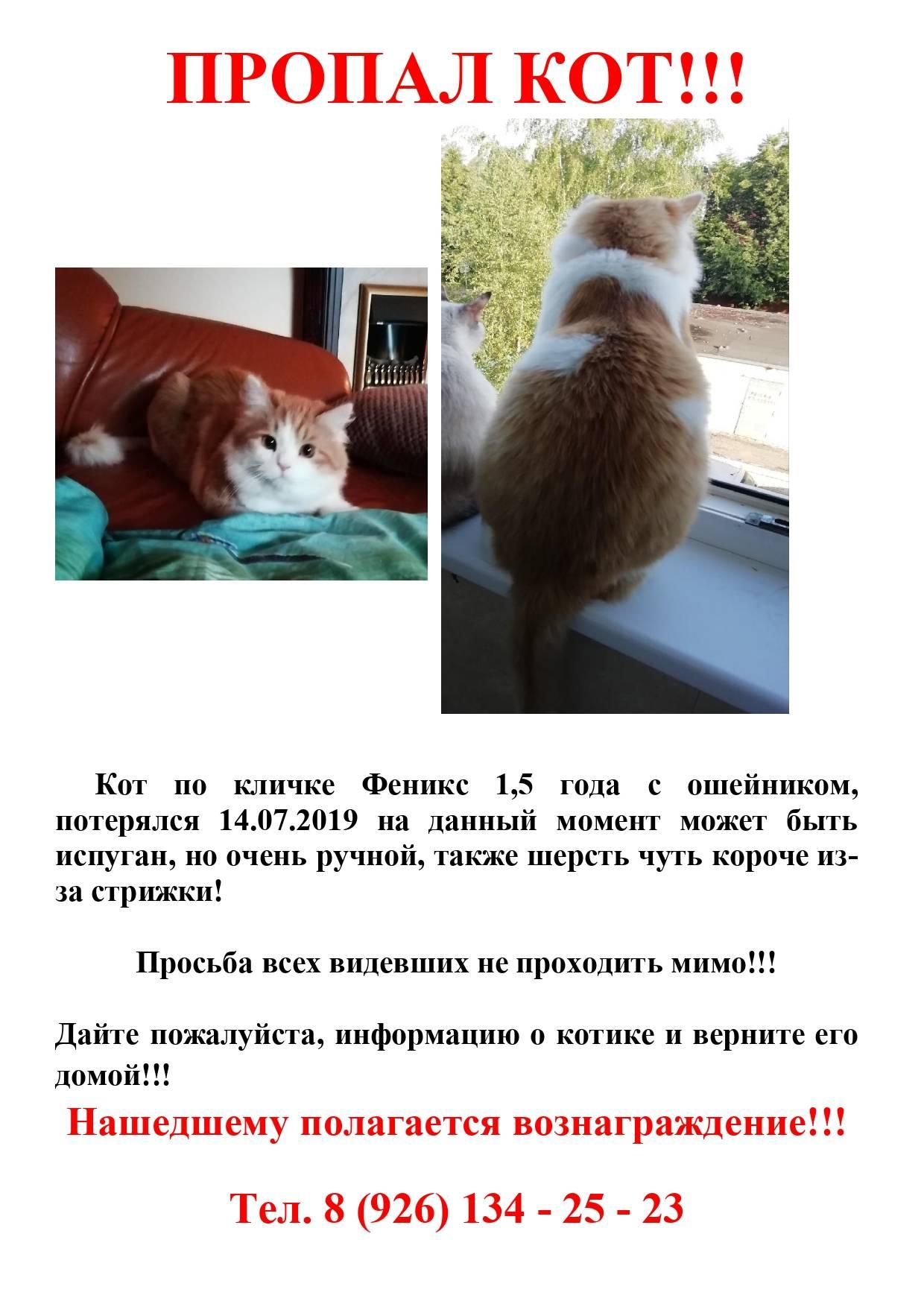 Как найти пропавшего кота — на улице, даче, в огороде, деревни