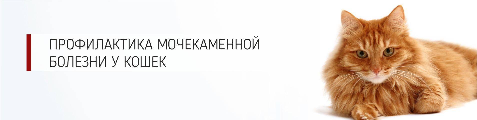 Девять жизней: составлен рейтинг самых частых болезней кошек и собак - gafki.ru