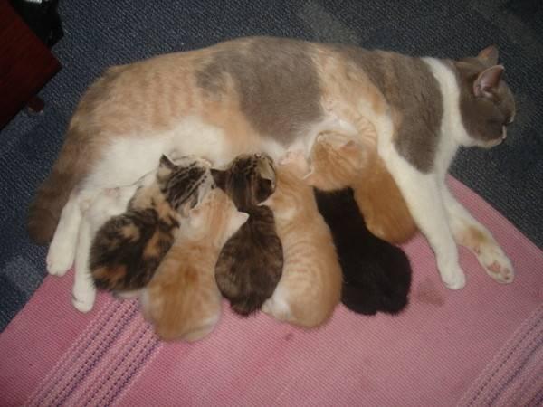 В каком возрасте глистогонят котят впервые