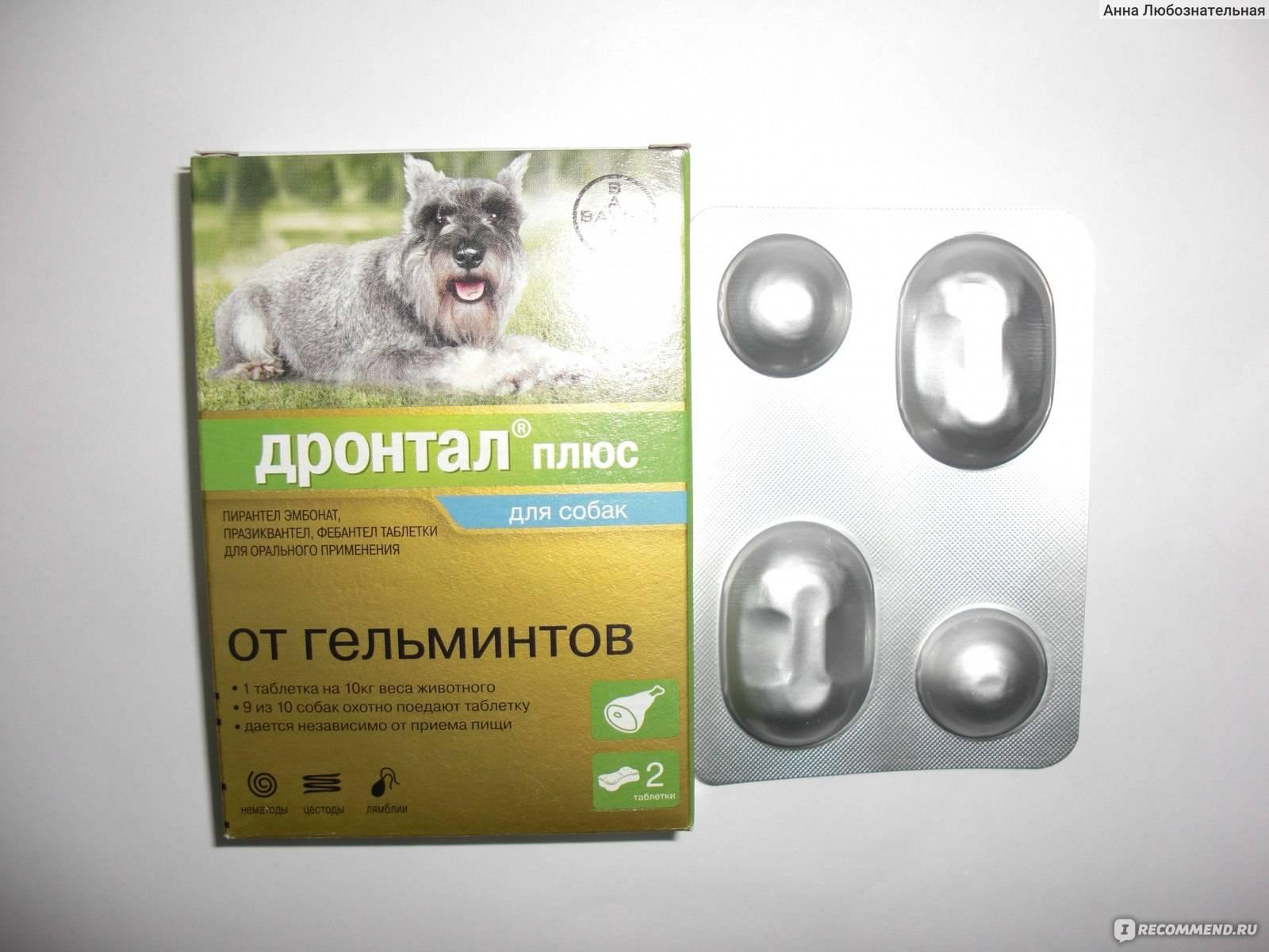 Дронтал для кошек - инструкция по применению, дозировка, побочные эффекты, аналоги, цена