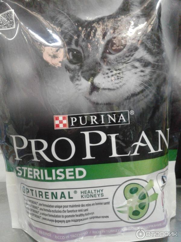 Чем кормить стерилизованных кошек и кастрированных котов: проплан и другие специализированные корма