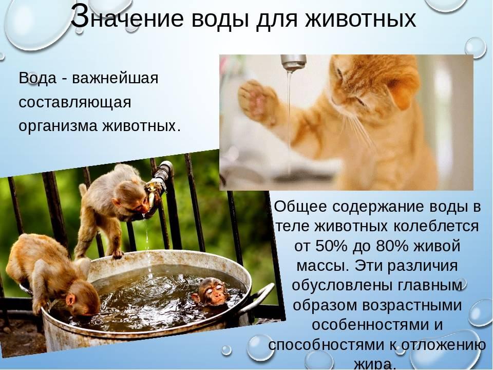 Сколько может прожить без воды и еды кошка, а коты?