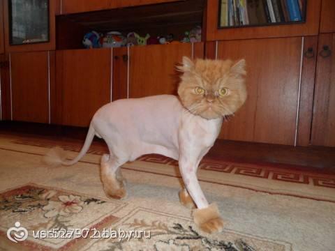 Зачем нужна стрижка котов и как это сделать?