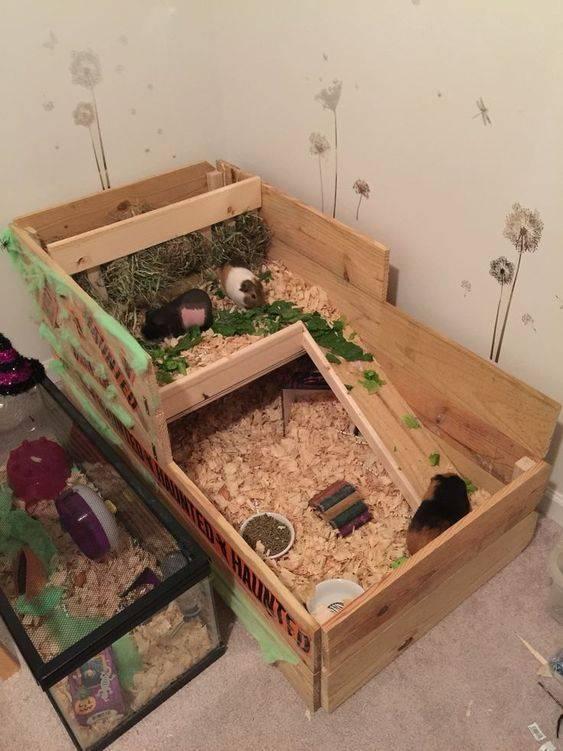 Домик для морской свинки: как сделать своими руками из дерева, фото мягкого жилья, как сшить из ткани, нужен ли дом в клетке и как его обустроить