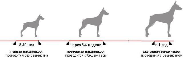 Можно ли с собакой гулять после первой прививки?