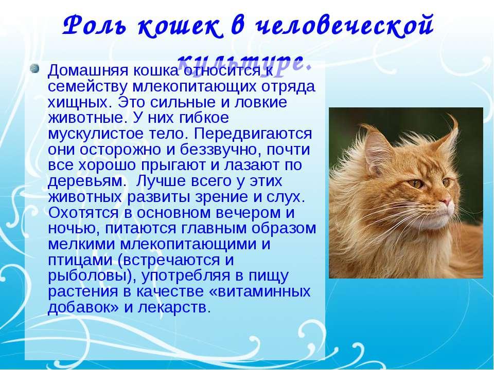 Повадки кошек – о чем они могут говорить?