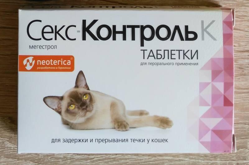 Круглосуточная ветеринарная клиника в подольске. сколько идет течка у кошек признаки и осложнения течки
