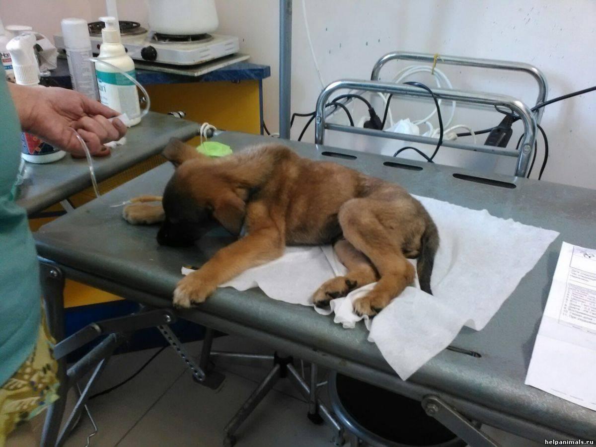 Энтерит у собак: симптомы, лечение, профилактика | forza10