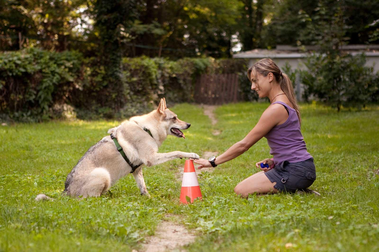 Дрессировка собак в домашних условиях для начинающих, 1 часть – с чего начать, команды ко мне и рядом