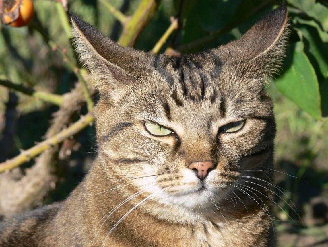 Кот-агрессор: разбираем причины
