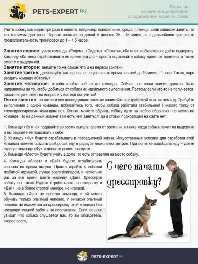 Дрессировка собак: основы, методы и приемы