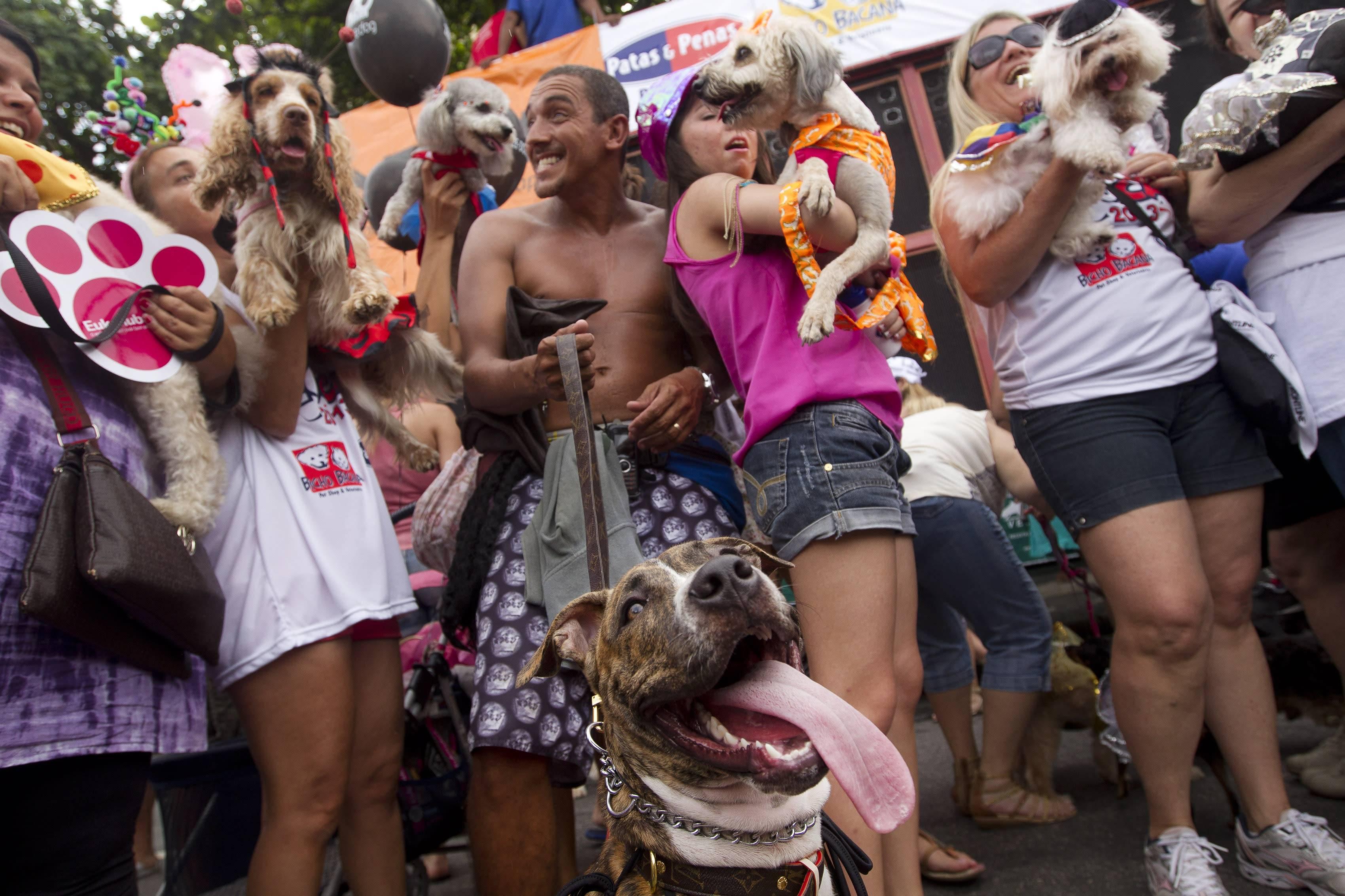 Карнавал в рио-де-жанейро, билеты на карнавал, транспорт, размещение