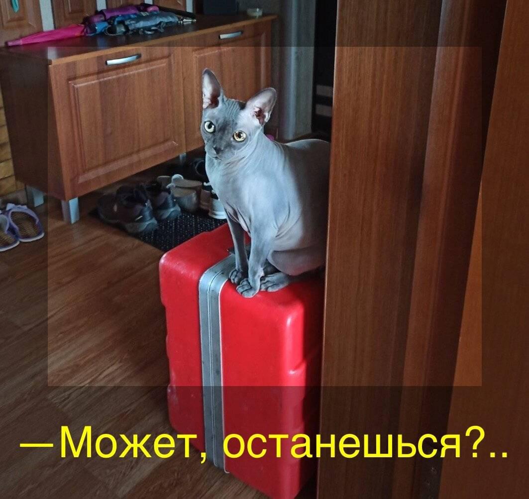 На сколько можно оставить кошку одну дома: примерные сроки, подготовка к плановому и внеплановому отъезду, кто может позаботиться о кошке