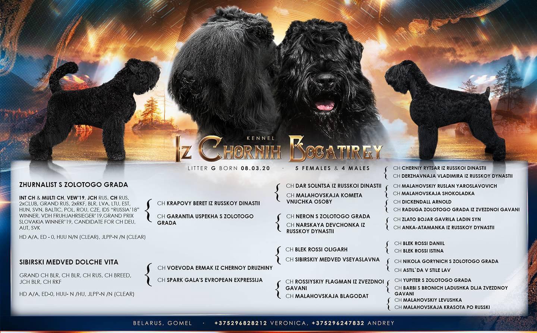 Порода собак русский черный терьер: фото, видео, описание породы и характер