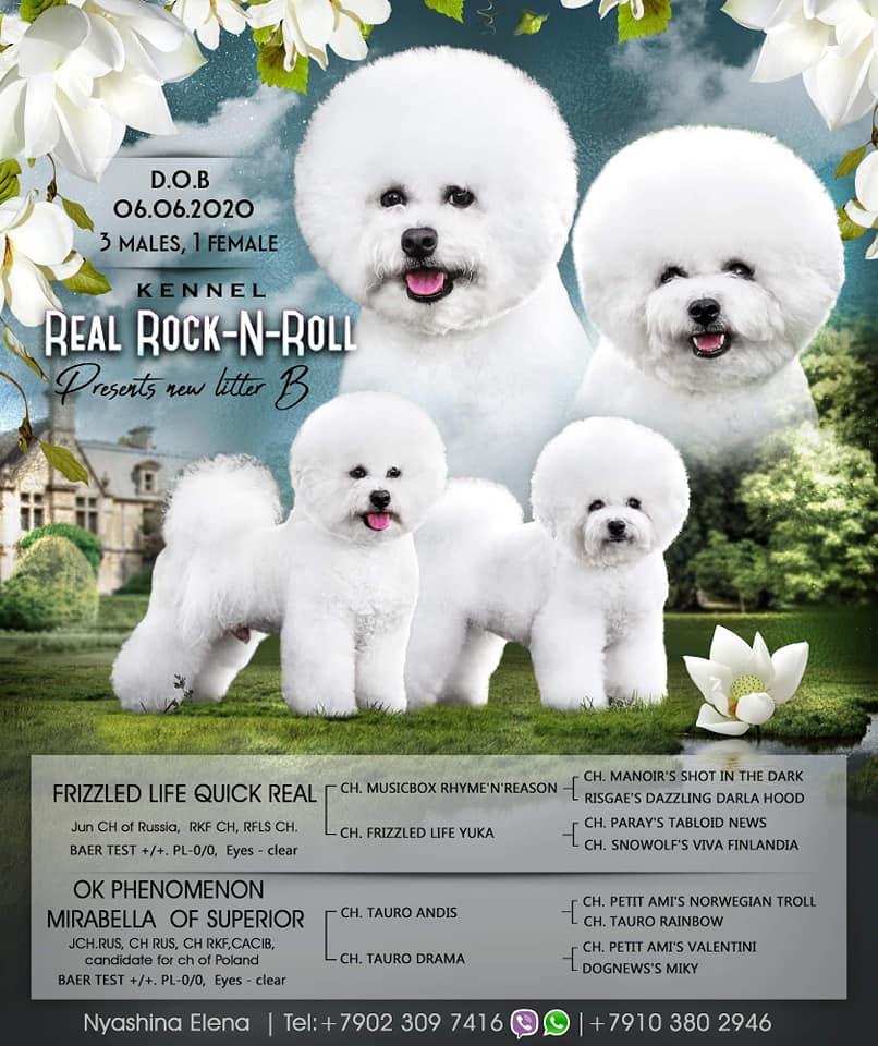 Бишон фризе: фото, цена, описание внешнего вида и характера собак, а также какова продолжительность их жизни и сколько стоят щенки этой породы?