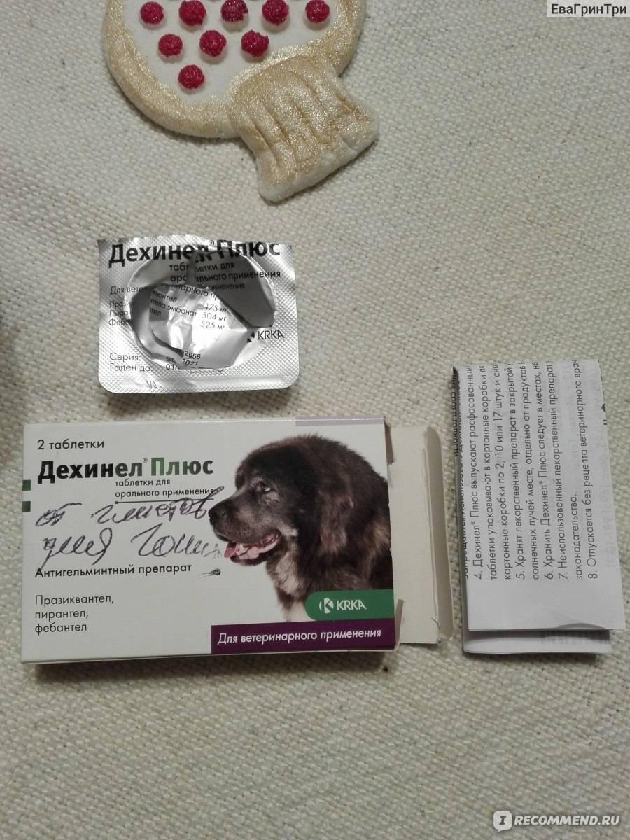 Дехинел плюс для собак: инструкция по применению, схема лечения, дозировка