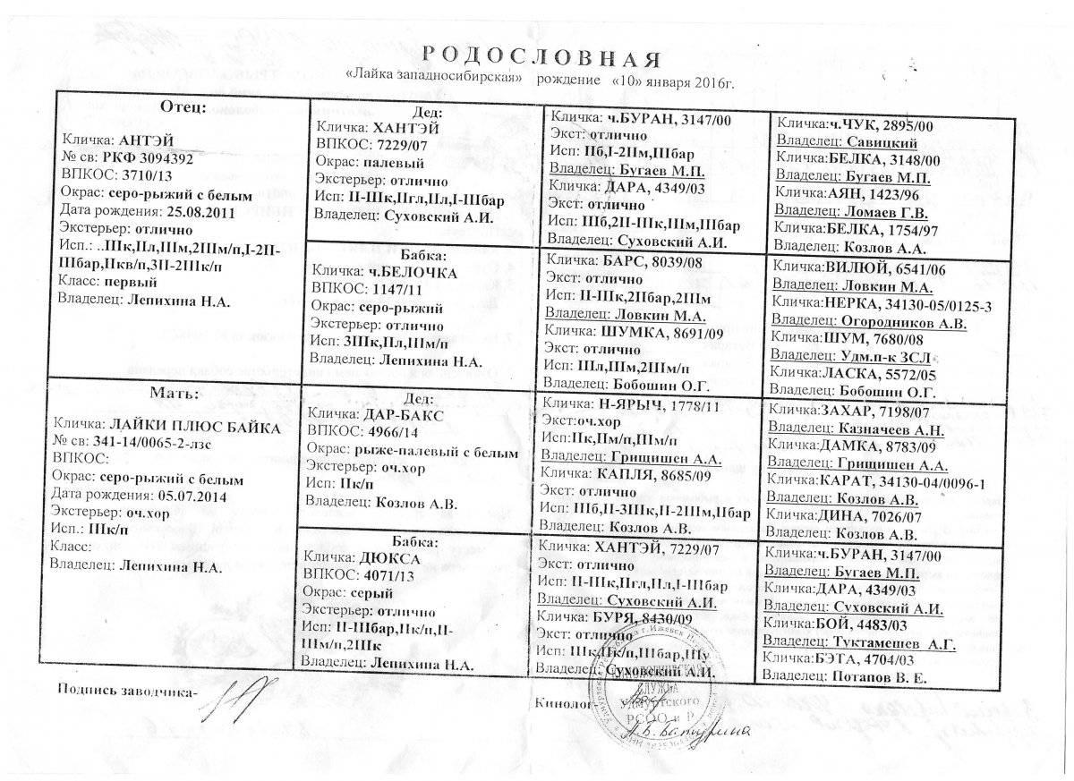 ᐉ клички западно сибирских лаек - zoomanji.ru