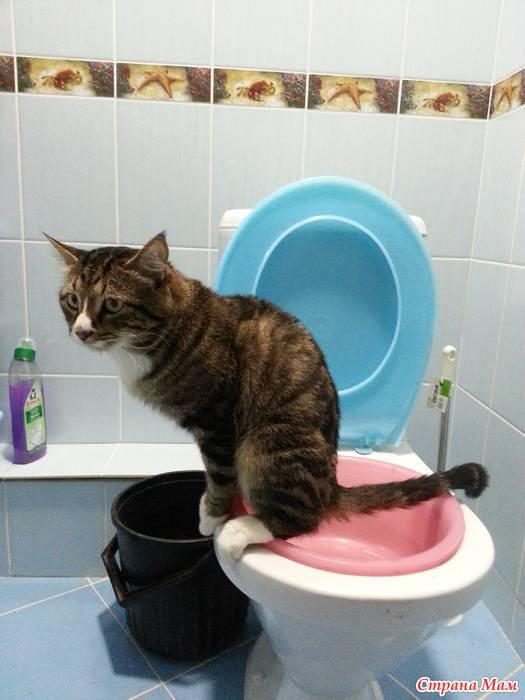 Как заставить котенка сходить в туалет: по большому (в первый раз)