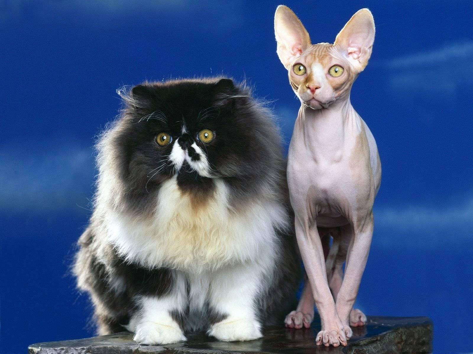 Самые лучшие кошки