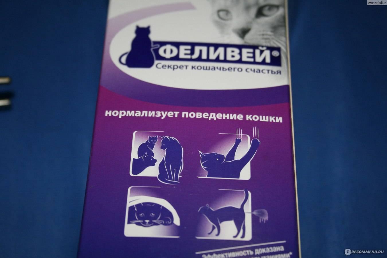 Феливей (feliway): спокойствие и дружелюбие кошки