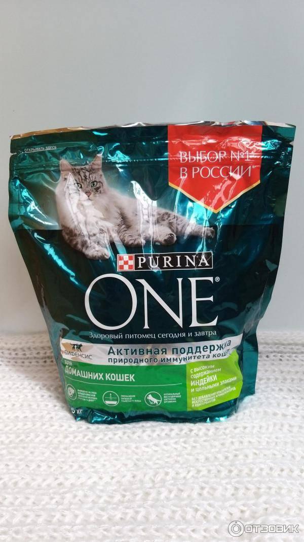 Рейтинг влажных кормов для кошек 2020 года: какой жидкий корм лучше, советы ветеринаров. влажный корм для кошек: рейтинг лучших по мнению ветеринаров